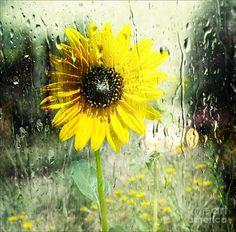 Sunshine Through The Rain Photograph  - Sunshine Through The Rain Fine Art Print