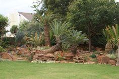 Cycad garden design-Centurion