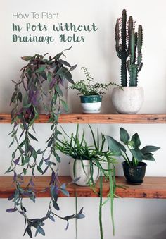 Borg collection and great planting tips via pistil nursery  if your like me and like to make plant pots out of things that aren't made to be plant pots. How to Plant in a Pot Without Drainage Holes