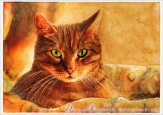 Cat at sunset by AuroraWienhold.deviantart.com on @DeviantArt