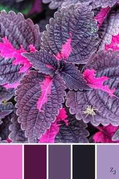 ZJ Colour Palette 592 #colourpalette #colourinspiration