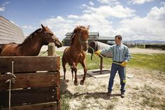 Learn the Basics of Training Your Horse: What You Need to Know Before You Begin