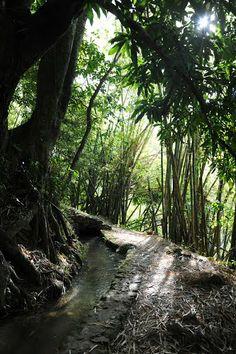 canal des esclaves / Le Carbet Outre Mer, Windward Islands, Porto Rico, Photo Images, Elle, Caribbean Sea, West Indies, Photos, Environment