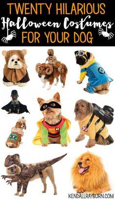Best halloween costumes for dogs animals pinterest halloween 20 hilarious halloween costumes for your dog halloween petcostumes ad solutioingenieria Images