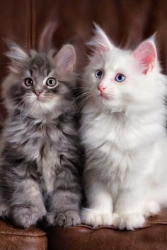 A couple of gorgeous kittens!