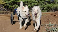 6 Simple Tips To Help You Best Care For Your Disabled Pet Disabled Dog Pets Dog Wheelchair