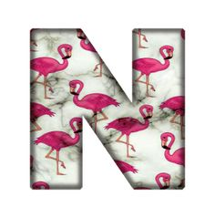 Letter N, Pet Birds, Miami, Design, Animals, Alphabet, Pretty Drawings, American Games, Animales