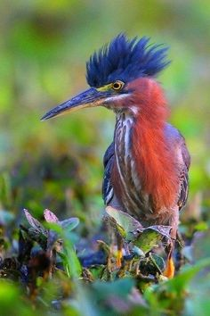 Colorful Bird...love his fluffy head!