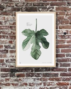 Plate B // FigUrban Botanic This art print is one of two prints in a small collection exclusively made for Simple Form - Australia.Both prints, Plate A / Eucalyptus and Plate B/ Fig, are available in two sizes in a limited edition of 300. Watercolor painting printed on 250 g. fine art photo paper. SHIPPINGThe art print is sold unframed and carefully packed and shipped in a cardboard tube to avoid damage during shipping.Fits perfectly into Ikea's RIBBA frame.