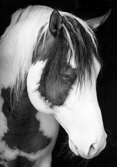 des belle photos en noir et blanc