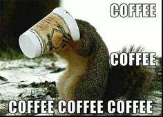 Coffee, Coffee, Coffee…..even the squirrels love coffee.....CF