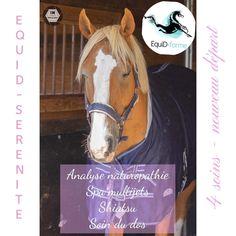 Soin du dos du cheval, analyse des besoins, Shiatsu, bassin multijets Shiatsu, Horses, Health Club, Naturopathy, Plunge Pool, Mathematical Analysis, Horse