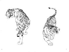Twin tigers watching both sides Body Art Tattoos, Small Tattoos, Cool Tattoos, Drawing Sketches, Drawings, Tiger Art, Illustration Art, Illustrations, Piercing Tattoo