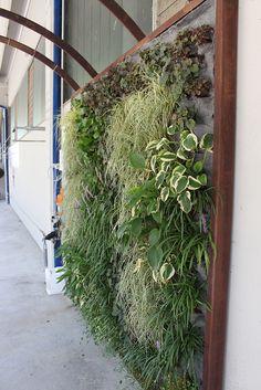 Realizzazione verde verticale - Brescia (BS)