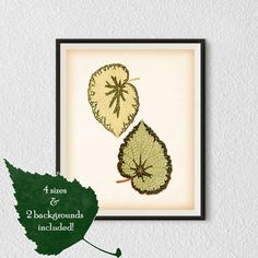 8x10 11x14 Vintage print Leaf print  by RestoredBotanicalArt
