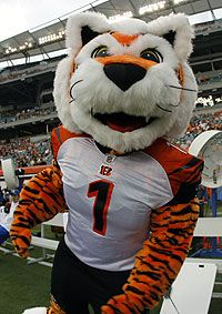 """Cincinnati Bengals mascot """"Who Dey"""" the Tiger. He was named after a popular Bengals chant. Buckeyes Football, Football Team, Cincinnati Bengals, Indianapolis Colts, Nfl Cheerleaders, Cheerleading, Bronco Sports, Team Mascots, Cleveland Browns"""