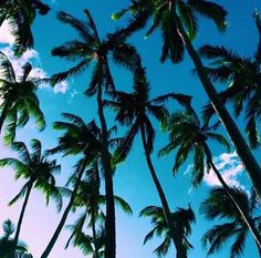 Palm trees r the best