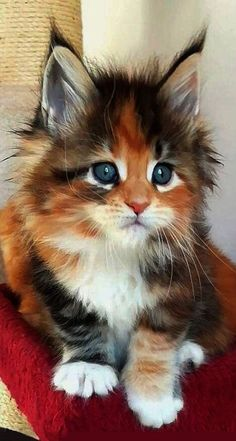 Kittens And Puppies, Cute Cats And Kittens, Cute Puppies, Adorable Kittens, Funny Kittens, Adorable Babies, Kittens Playing, Pretty Cats, Beautiful Cats