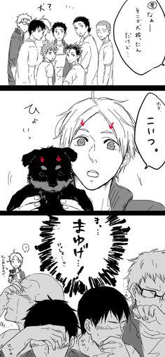 Sugamama and a puppy? <3 - Haikyuu!! / HQ!!