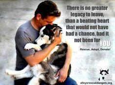 Rescue. Adopt. Donate.