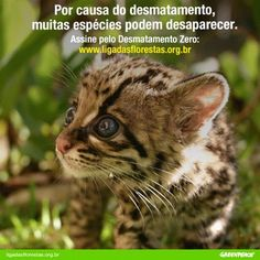 Proteja a biodiversidade brasileira. Proteja as florestas brasileiras. Assine pelo #DesmatamentoZero