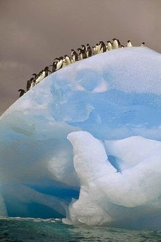 Adelie Penguins, Iceberg Antarctica | Incredible Pics