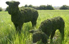 Topiary Sheep