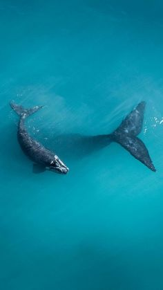 If you're looking for a Whale or Orca gift ideas, look no further. Passport Ocean provides a lot of Whales and Orcas jewelry : Jewelry, Apparel. Beautiful Creatures, Animals Beautiful, Cute Animals, Ocean Photography, Animal Photography, Wild Life, Wale, Ocean Creatures, Humpback Whale