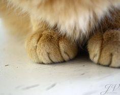 Pet Photography Cat Paws Print by DesignByJV on Etsy, $8.00