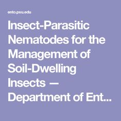 Insect-Parasitic Nematodes for the Management of Soil-Dwelling Insects — Department of Entomology — Penn State University Insect Pest, Pest Management, Enemies, State University, Insects, Gardening, Garten, Lawn And Garden, Garden
