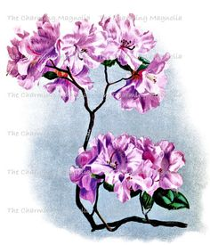 Vintage Rhododendron Flower Print Digital by TheCharmingMagnolia, $2.00