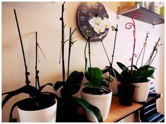 Как правильно ухаживать за орхидеями. Полезные советы!
