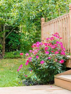 One thing to keep in mind about Knock Out rose bushes is that they are very quick growing.do I need to prune Knock Out roses? Read here to look at what goes into pruning Knock Out roses. Front Garden Landscape, Front Yard Landscaping, Landscape Design, Garden Design, Landscaping Ideas, Landscaping Plants, Backyard Patio, Backyard Ideas, Garden Yard Ideas