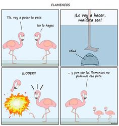 Flamencos. #humor #risa #graciosas #chistosas #divertidas