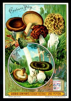 Dolls House Apothecary Shaggy Ink Cap Fungi Bottle And Colour Label