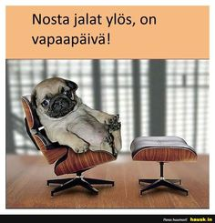 Nosta jalat ylös, on . Good Morning, Funny, Cute, Dogs, Animals, Psychology, Friday, Facebook, Corgi Pups