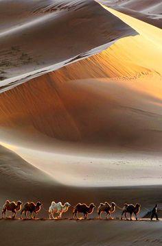Camels in desert sands Beautiful World, Beautiful Images, Paises Da Africa, Desert Sahara, Gobi Desert, Cool Pictures, Cool Photos, Deserts Of The World, Desert Life