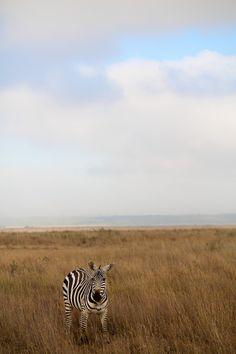 Nairobi, Kenya Kenya Nairobi, Where To Go, Wonders Of The World, Safari, Travelling, Goal, African, Places, Animals