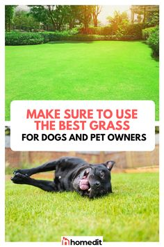 Did you know that there are bad and good types of grass for dogs? Dogs are bundles of joy, yet some of them can do damage that often leaves the owner frustrated. Find out how to make sure you find the best grass for them. Fake Grass For Dogs, Artificial Grass For Dogs, Types Of Grass, Grass Type, Centipede Grass, Turf Builder, Artificial Grass Installation, Bermuda Grass, Dog Furniture