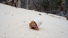 A photo of a hermit