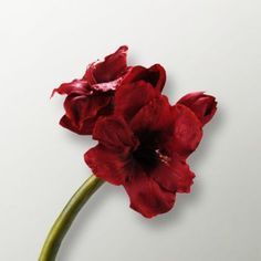 Foyer Artificial Amaryllis Single Red Flower - One of the most attractive decor items for contemporary homes, this Foyer artificial flower will certainly jazz up any mantelpiece and looks smashing in red. The use of linen ensures enhanced longevity and quality.
