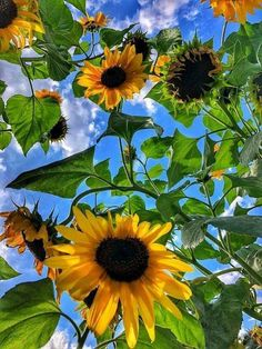 Happy Flowers, My Flower, Flower Art, Flower Power, Wild Flowers, Beautiful Flowers, Sun Flowers, Growing Sunflowers, Sunflowers And Daisies