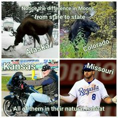 MOOSE funny
