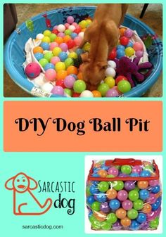 Have fun with this simple DIY dog ball pit activity! DIY   Dog Projects   Dogs   Dog Toys   Games for Dogs   Ball Pit   Activities for Dogs  