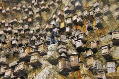 """The Shennongjia Nature Reserve in central China has an unusual approach to boost the country's dwindling bee population: a sky-high, vertical apiary. Roughly 700 wooden beehives hang from a cliff 4,000 feet above sea level on a mountain in the conservation area. According to People's Daily Online, this vertigo-inducing """"wall of hives"""" is meant to …"""