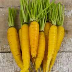 Amarillo Carrots - Lovely, lemon-yellow carrots have sweet, bright yellow flesh. Good for a summer to fall crop;