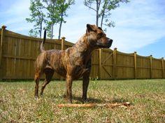 Meet a Lowcountry Dog: Wakelee
