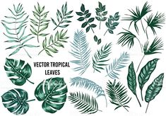 Image result for palm leaf