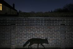 """Winner, Urban – """"Shadow Walker"""" by Richard Peters from the UK 