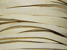 Deerskin Lace Buckskin 1/8th inch wide from Nosek's Just Gems